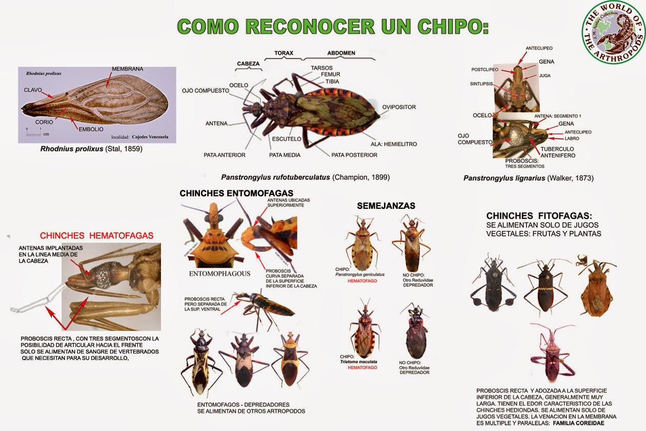 ¿Cómo se transmite la enfermedad de Chagas?